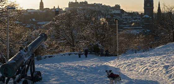 snowy scene with a dog in the foreground